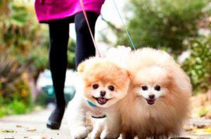 После прочтения самая милая собака в мире будет у вас