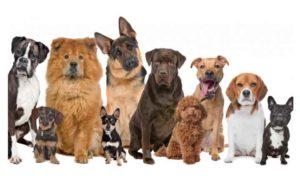 Какие бывают собаки по размерам