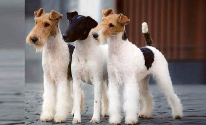 Собаки средних размеров могут быть самыми разнообразными. Одни очень активны и энергичны, другие наоборот очень спокойны. Каждый человек может выбрать подходящую породу собак для себя. Они являются очень хорошими компаньонами для всей семьи, так как изначально выводились в большинстве своем как пастушьи собаки, благодаря чему развили большое терпение и ясный ум.