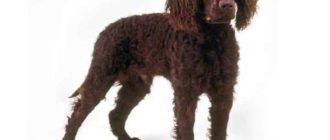 У собаки очень крепкие лапы