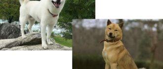 Хоккайдо и айну – это одна и так же порода собак, имеющая только лишь разные названия.