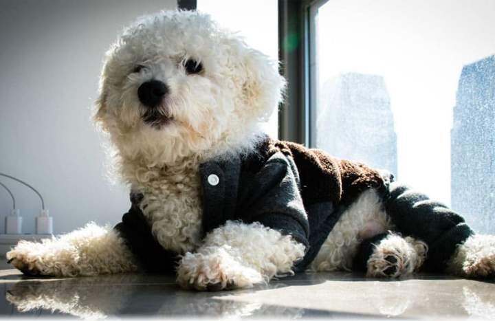 Очень милые собаки, которые на первый взгляд кажутся абсолютно круглыми.