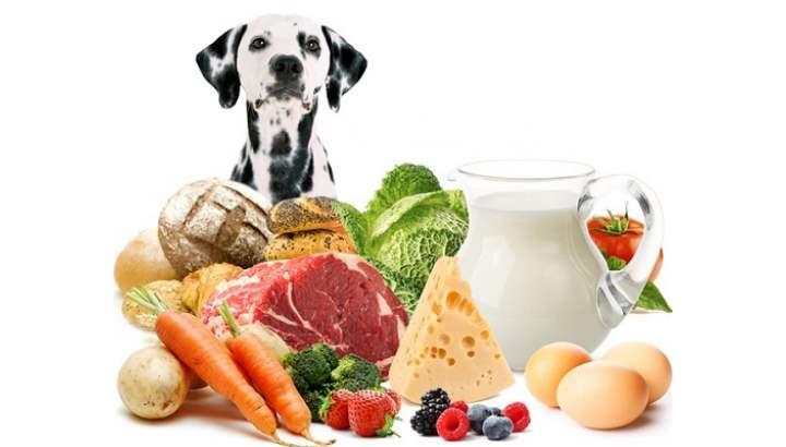 мясо и субпродукты должны составлять треть рациона