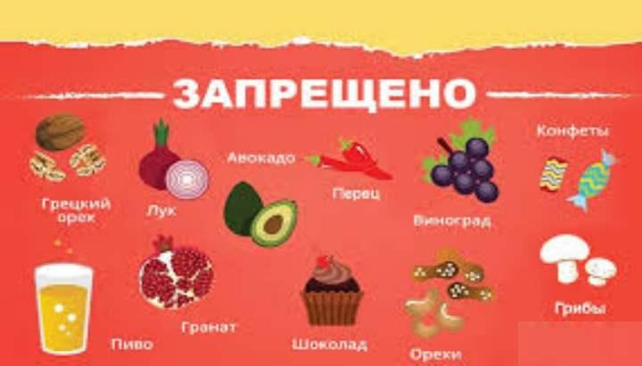 категорически нельзя кормить следующими продуктами