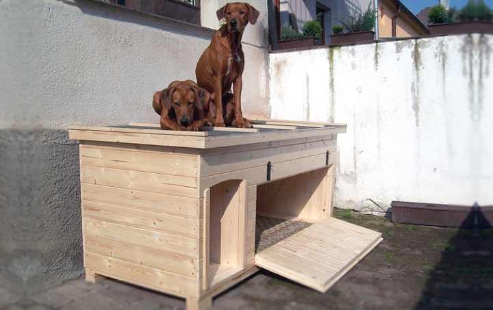 Конура для собаки станет ее любимым местом