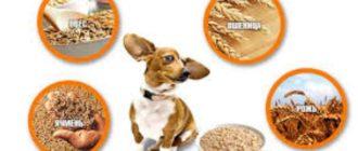 Как варить кашу для собак правильно?