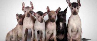 на самом деле названий пород лысых собак куда больше