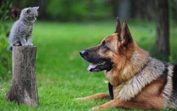 Могут быть надежными охранниками