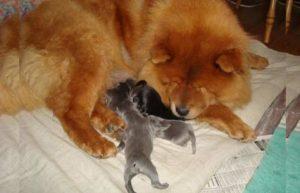 наиболее популярные породы собак с рыжим цветом шерсти