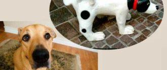 Знать новоиспечённому хозяину маленького щенка