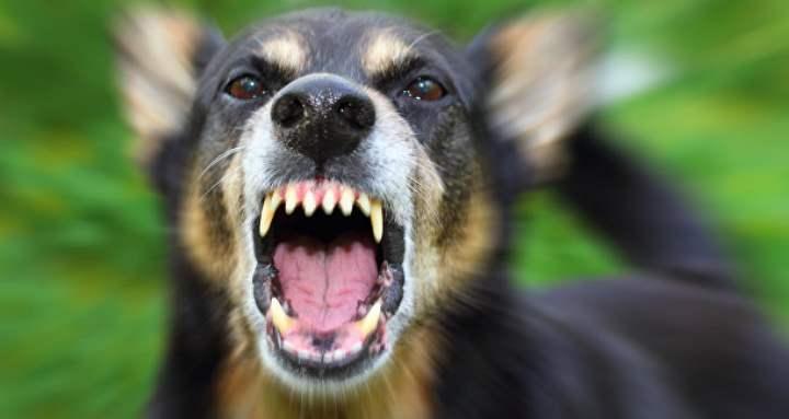 Но не всегда охраняя владельца или территорию псы готовы непременно ринуться в атаку