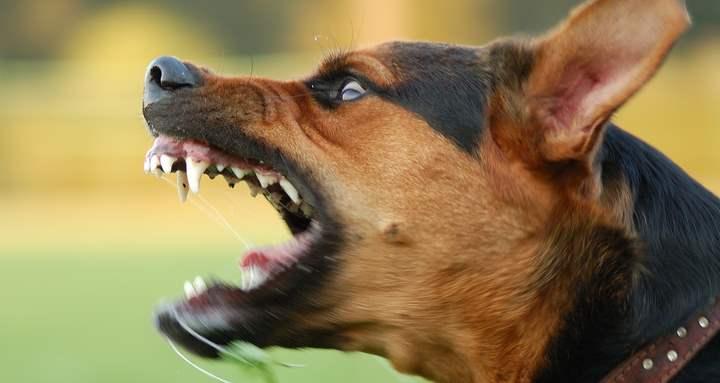 Вторая по распространённости причина лая собаки — это охранные инстинкты