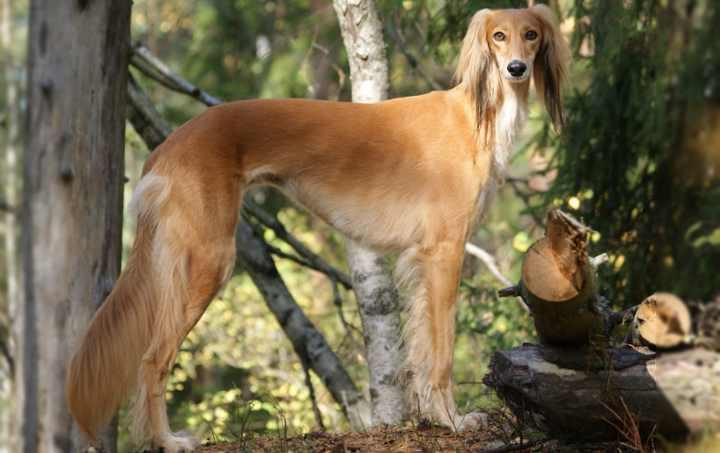 Собаки отличаются отменным здоровьем