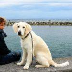 В этой статье обсудим, какую собаку лучше завести - породы собак для новичков.
