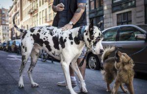 Существует множество пород пятнистых собак. Но, тем не менее, есть определенный перечень собак, пятна у которых являются их визитной карточкой, с помощью которых их точно можно отличить от других пород.