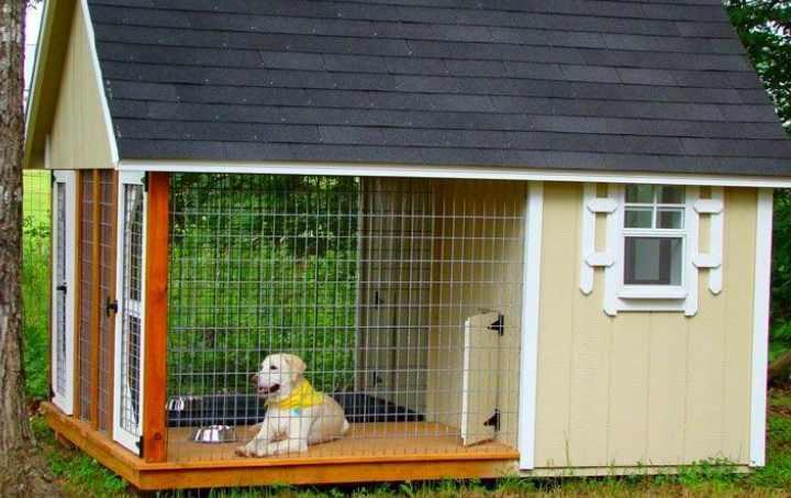 Собакам больше нравятся будки