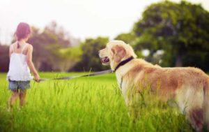 Собаки очень интеллектуальные животные
