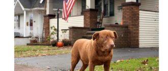 Существует мнение, что первые собаки, появившиеся на территории Америки, попали туда сухопутным путем вместе с передвигающимися кочевниками.