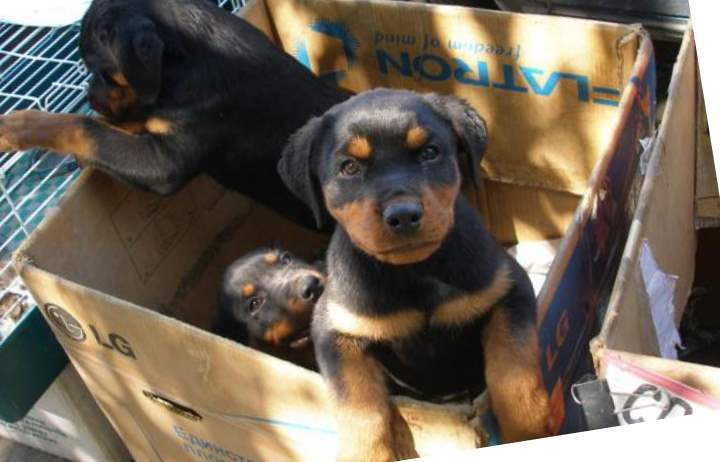 Выбор места для покупки собаки