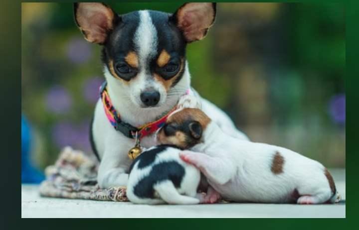 Условия содержания щенка