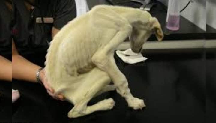 Роль питания в жизни собаки
