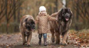 не видят смысла держать в хозяйстве более мелких псов