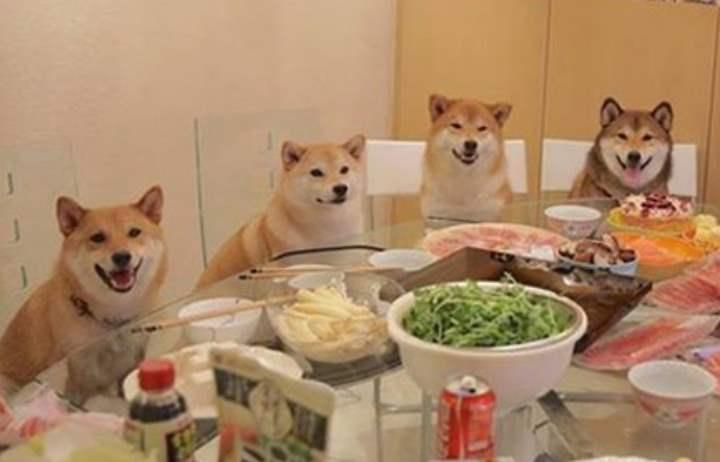 Решив завести себе собаку породы Сиба-ину, рекомендуем, для начала, ознакомиться с отзывами владельцев Сиба-ину.