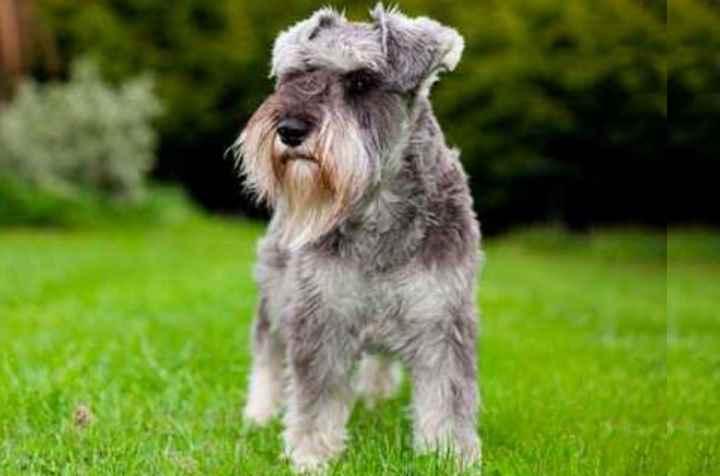 Перед тем, как покупать собаку, необходимо выяснить всю информацию о ней и особенно ее характере
