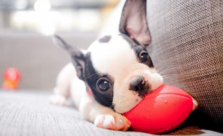 Практически самым главным фактором, влияющим на принятие решения о покупке, является фотографии продаваемых щенков.