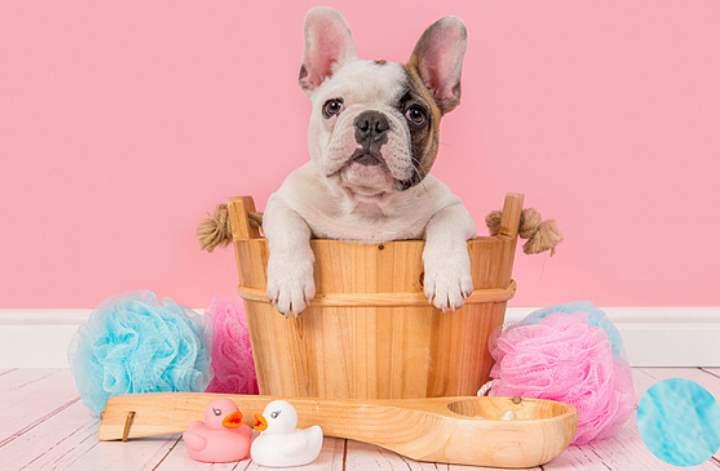 В некоторых случаях можно избежать купания просто почистив шерсть собаки щеткой