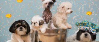 Шерсть разных пород собак пачкается по-разному