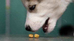 Глюкоза не усваивается у собак