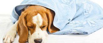Собаки, чьи контакты с бродячими собаками никак не ограничиваются хозяином.