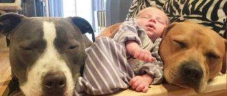 Существует несколько наиболее ярких представителей собак