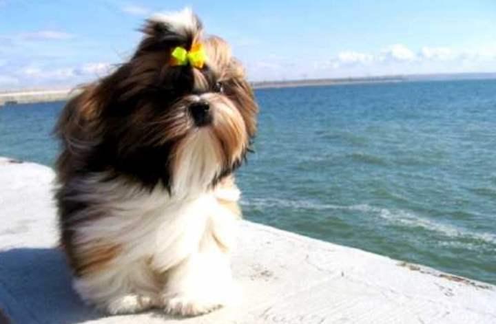 Небольшие собаки, которые комфортно чувствуют себя в условиях квартиры