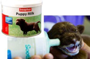 - в помете слишком много щенков и собачьего молока всем не хватает;