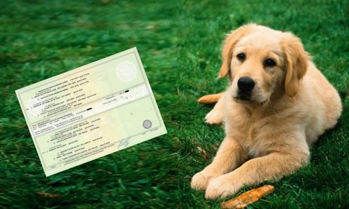 Документ о происхождении собаки