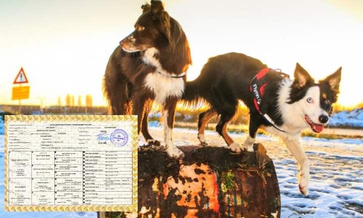 Внешний вид собачьих документов