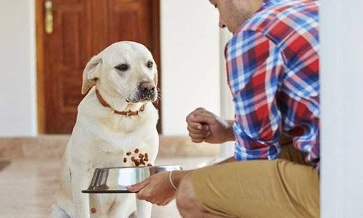 Многие рядовые собаководы считают, что собаки настолько умные, что едят траву и тошнят потом ею от того, что чистят свой организм от токсинов и шлаков