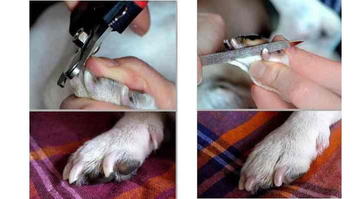 Внимательно подходите к выбору инструмента для подрезания когтей
