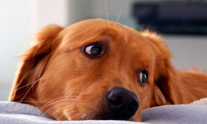 Боли в животе могут повлиять на дыхание собаки
