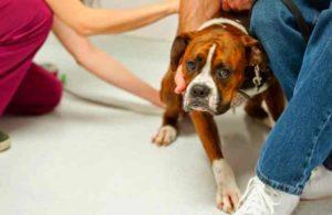 Первая помощь при приступе эпилепсии у собаки: Обзор +Видео