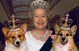 Вельш корги – собака английской королевы и покоритель сердец жителей современных городов