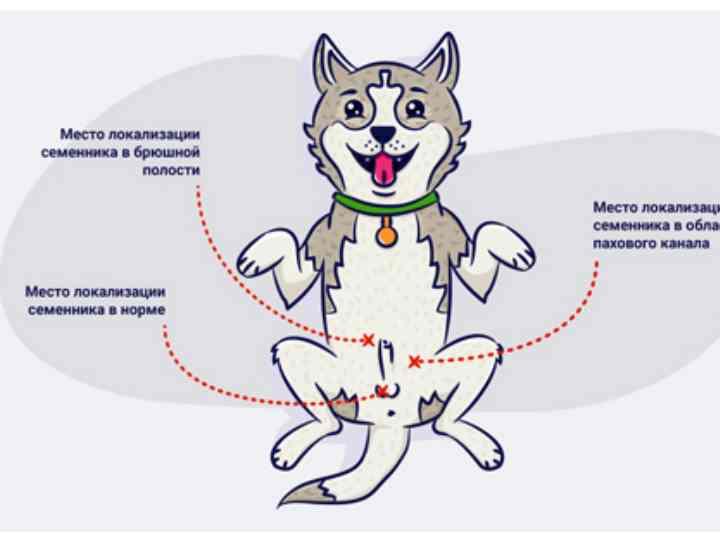 Данное заболевание опасно тем, что животное не испытывает никаких болевых ощущений