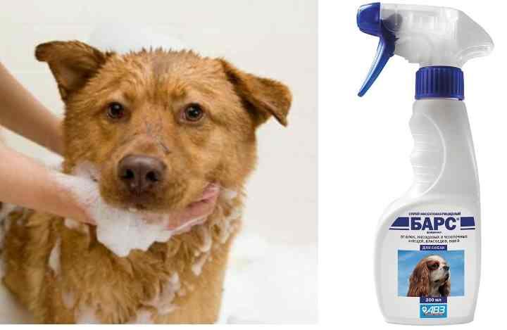 купание собаки с использованием специализированного шампуня;