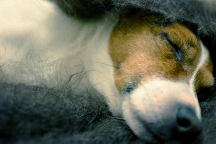 Профилактика простуды у собак