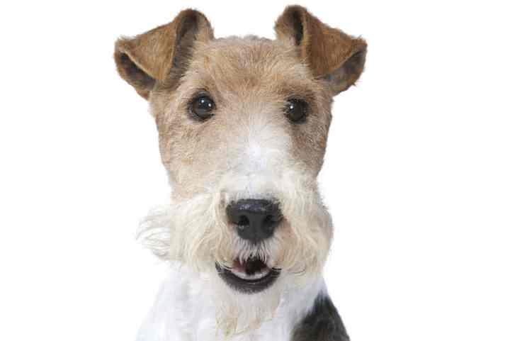 можете подобрать для себя идеальную потенциальную породу собак